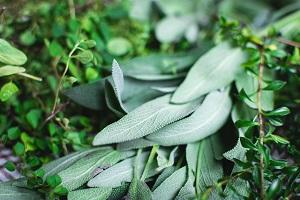 produkty śródziemnomorskie - zioła
